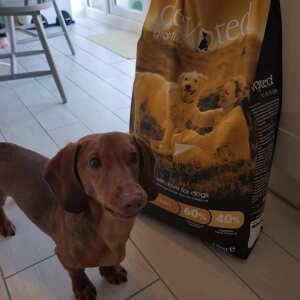Devoted Pet Foods Reviews | 8th April 2020