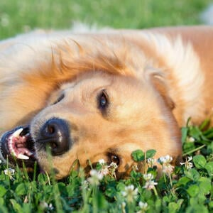 Devoted Pet Foods Reviews | 29th April 2020