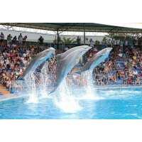Read Algarve Fun Reviews