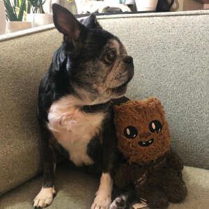 Koa's House Pet Supplies 5 star review on 24th September 2020