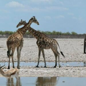 African Overland Tours 5 star review on 20th January 2020