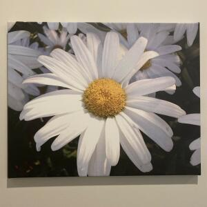 Easy Canvas Prints 5 star review on 17th November 2020