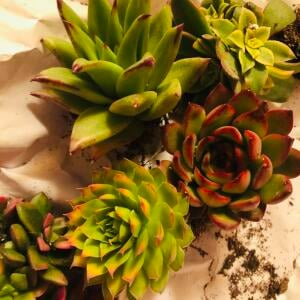Succulents Depot 5 star review on 22nd January 2021