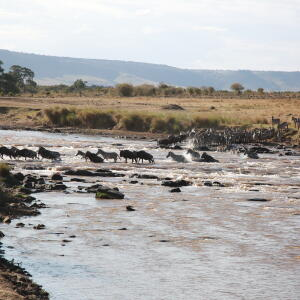 African Overland Tours 4 star review on 8th September 2018