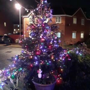 Christmas Trees Liverpool 5 star review on 19th December 2020