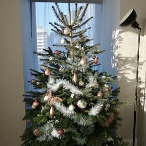 Christmas Trees Liverpool 5 star review on 8th December 2020