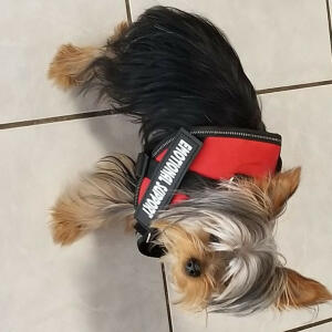 serviceanimalbadge-com 5 star review on 13th February 2020