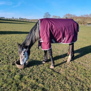 GS Equestrian 5 star review on 25th March 2020