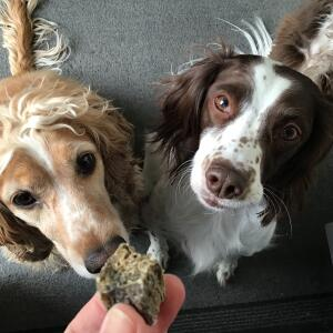 Fish4dogs Ltd 5 star review on 13th April 2021