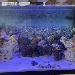 Kraken Corals 5 star review on 11th September 2021