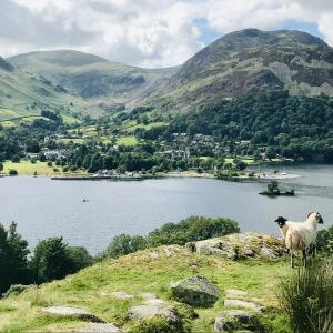 Herdwick Cottages 5 star review on 25th July 2020