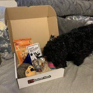 Postman Pooch 5 star review on 4th August 2020