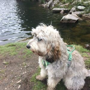 Mountain Dog 5 star review on 3rd August 2020