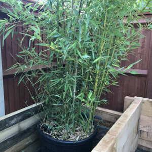 Grasslands Nursery 5 star review on 11th September 2021