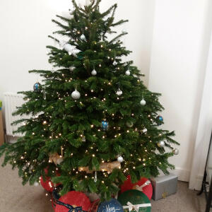 Christmas Forest 5 star review on 9th December 2020
