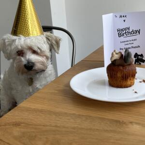 Postman Pooch 5 star review on 27th July 2021