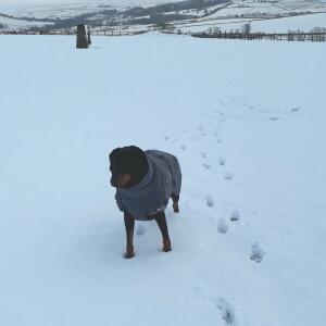 Mountain Dog 5 star review on 13th January 2021