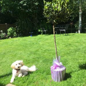 Tree2mydoor 5 star review on 11th June 2021