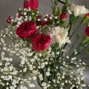 B&M Flowers 5 star review on 26th November 2020