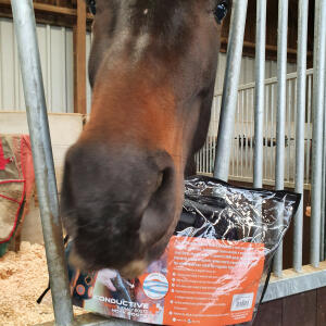 Equestrian Giveaways 5 star review on 16th September 2020