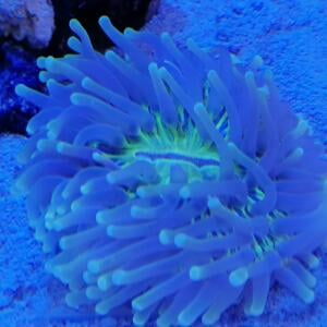 Kraken Corals 5 star review on 9th January 2021