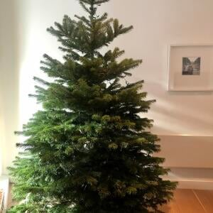 Christmas Forest 5 star review on 23rd November 2020