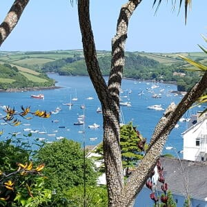 Salcombe Finest 5 star review on 2nd July 2017