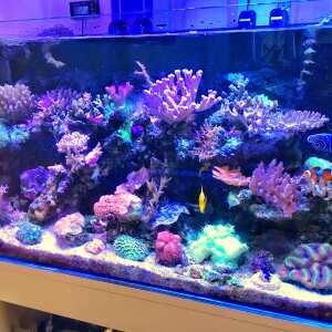 Kraken Corals Limited 5 star review on 10th September 2018