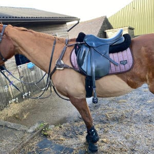 Equiflair Saddlery 5 star review on 22nd January 2021