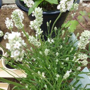 Grasslands Nursery 5 star review on 10th June 2021