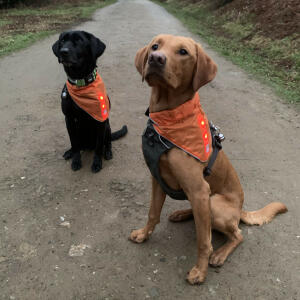 Mountain Dog 5 star review on 27th November 2020