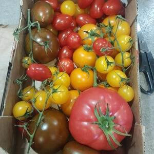 The Tomato Stall 5 star review on 20th July 2021