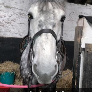 GS Equestrian 5 star review on 5th March 2021