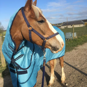 GS Equestrian 5 star review on 4th April 2020