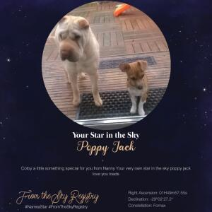 From the Sky Registry - Name a Star Gifts 5 star review on 26th November 2020