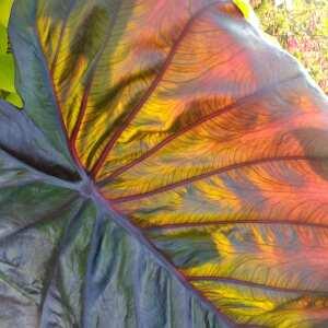 Farmer Gracy Flower Bulbs 5 star review on 11th December 2020