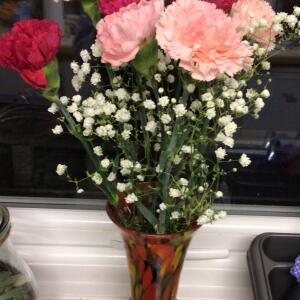 B&M Flowers 5 star review on 1st December 2020