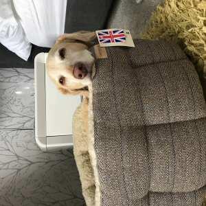 Pet Supplies Warehouse Ltd 5 star review on 5th September 2019