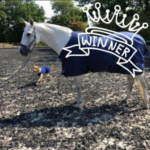 Equestrian Giveaways 5 star review on 7th December 2020