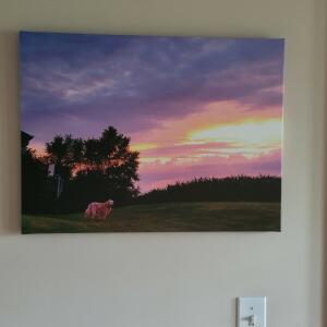 Canada - Easy Canvas Prints 5 star review on 28th July 2021