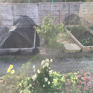 Gardening Naturally 5 star review on 13th April 2021