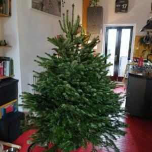 Christmas Forest 5 star review on 18th November 2020