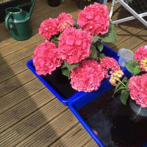 Grasslands Nursery 5 star review on 15th June 2021