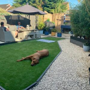 LazyLawn 5 star review on 14th June 2021