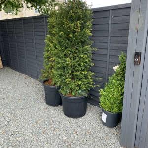 Grasslands Nursery 5 star review on 3rd October 2021