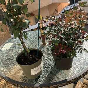 Ashwood Nurseries 5 star review on 17th September 2021
