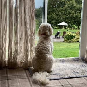 PetsPyjamas 5 star review on 21st September 2021