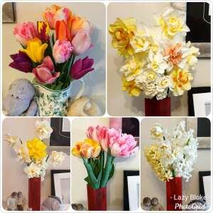 Farmer Gracy Flower Bulbs 5 star review on 18th April 2020