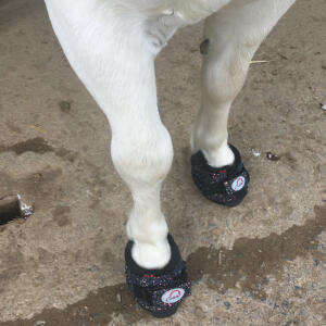 GS Equestrian 5 star review on 26th July 2021