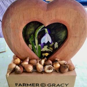 Farmer Gracy Flower Bulbs 5 star review on 19th October 2020